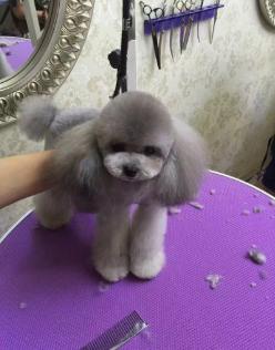 宠物狗送去洗澡剃毛后丢失!按淘宝价还是按购买价赔偿?